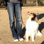 2015年生まれの「子犬限定キャンペーン!」 6月末まで