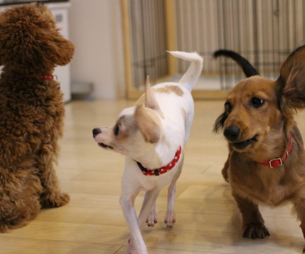 犬や人が苦手などお悩みは犬の幼稚園