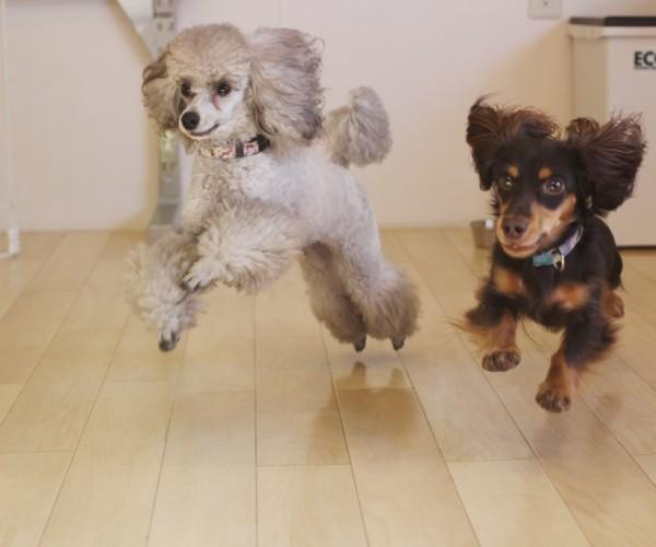 犬のしつけ 犬との遊びも