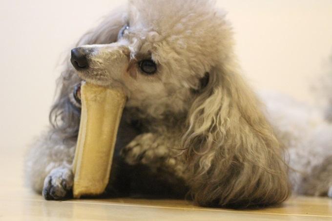 犬 食べ物を守る
