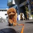 散歩で社会化する犬