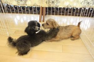 犬 混合ワクチン