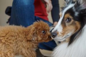 中型犬と小型犬