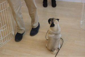 トレーニングイベント マテ 犬のまわり