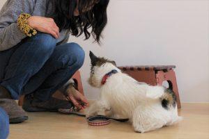 犬の保育園 ジャックラッセルテリア フセ