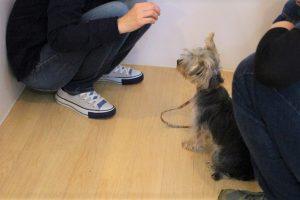 犬の保育園 ヨークシャーテリア オスワリ