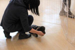 犬の保育園 ミニチュアダックスフンド フセ