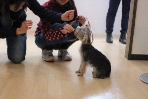 犬の保育園 ヨークシャーテリア スワレ