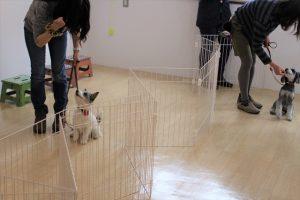 犬の保育園 だるまさんがころんだ 犬とゲーム