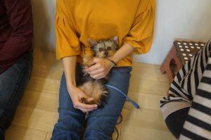リラックスポジション 体を触る 子犬
