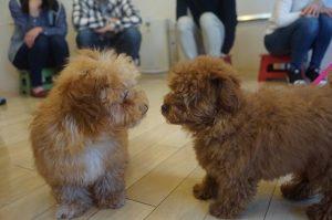 パピーパーティー 子犬の挨拶