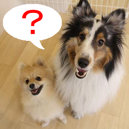 犬の保育園って?