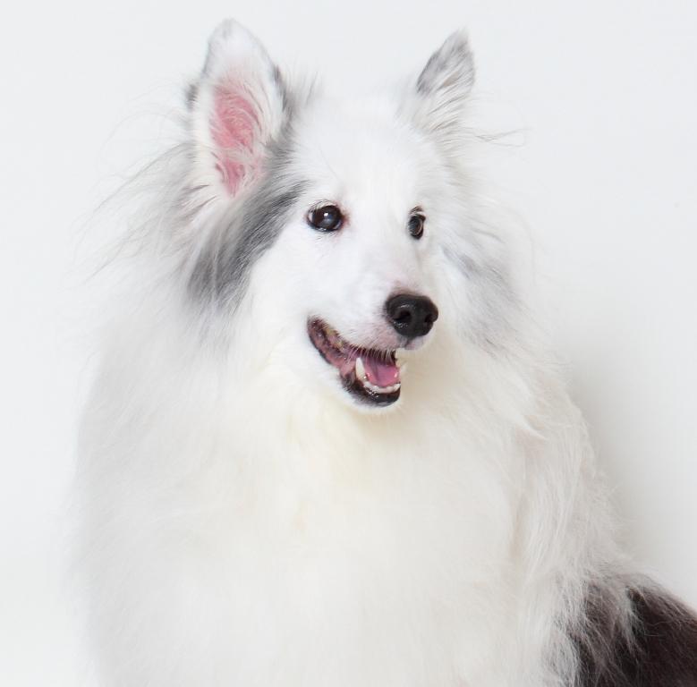 しつけは犬の保育園vowbeeのブログも参考に