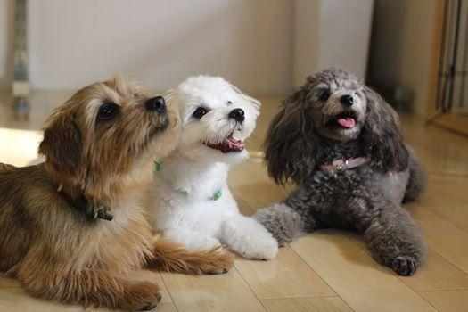 犬の保育園 調布 世田谷 三鷹 吉祥寺