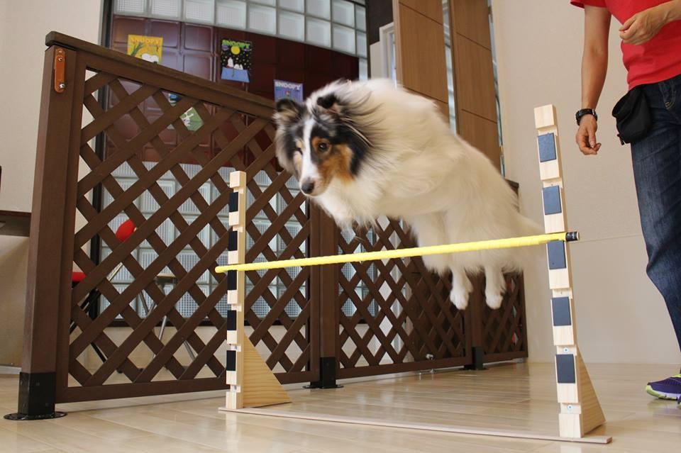 犬のトレーニング 調布