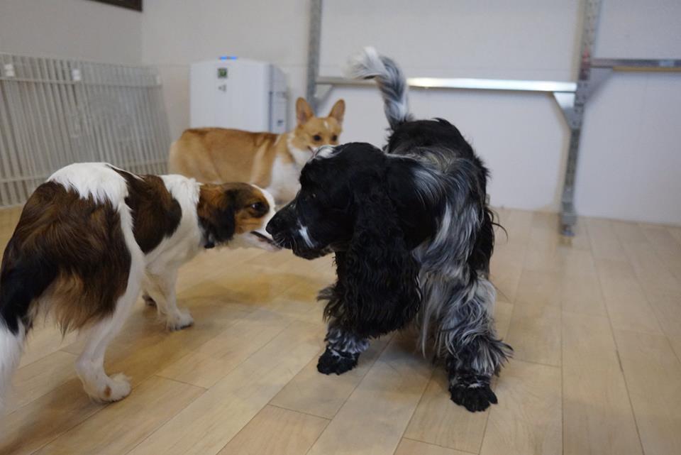 中型犬の遊び