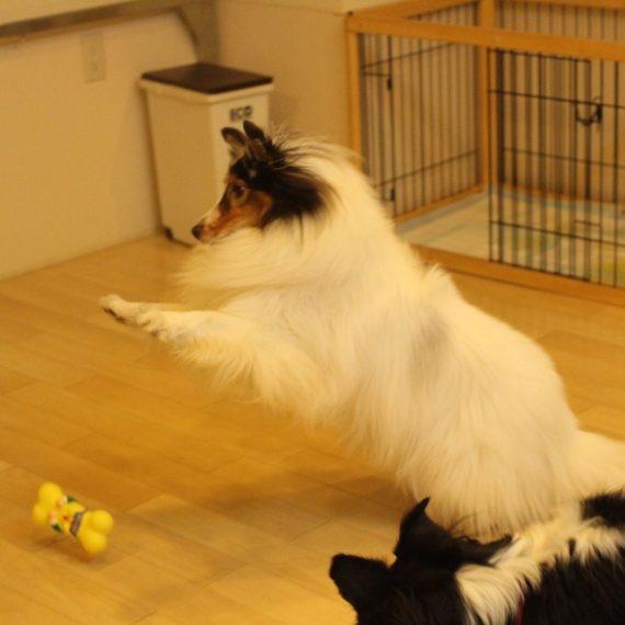 犬のトータルサポート